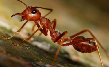 Как уничтожить муравьев народными средствами?